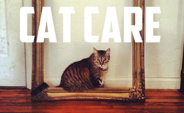 miami_cat_sitter