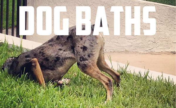 miami_dog_groomer